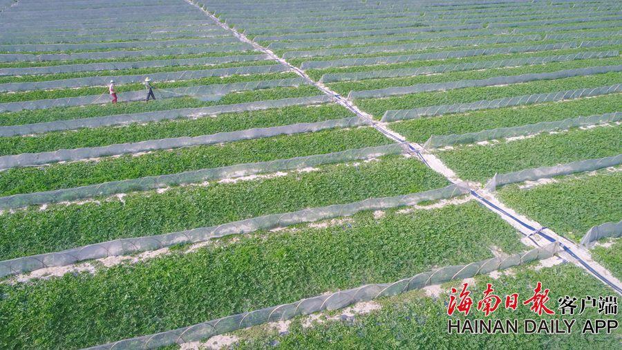 谷雨将至 农忙时 春种春播关键期