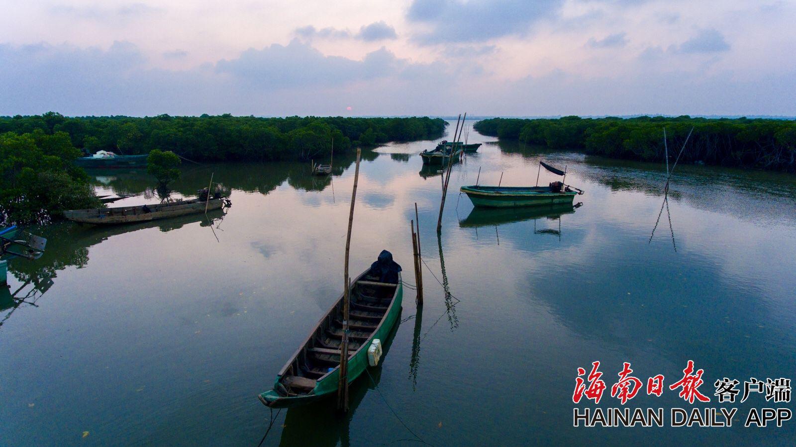 组图丨海南东寨港红树林翠色欲滴
