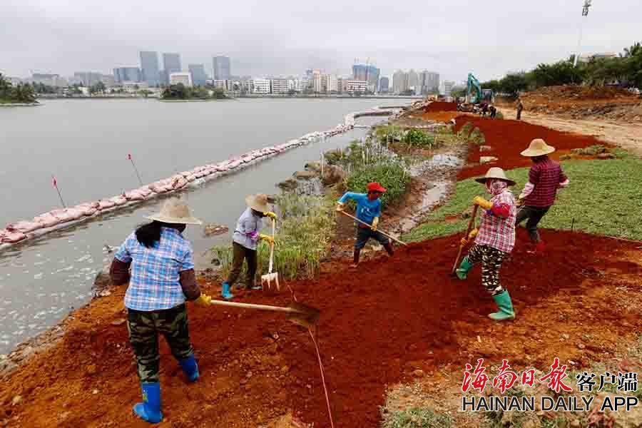组图|海口红城湖公园南岸绿化示范段施工