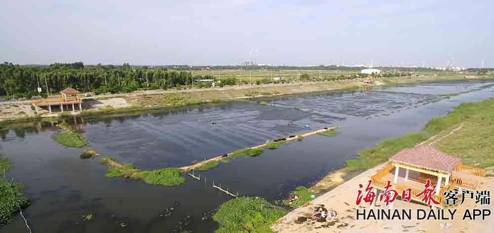 东方市罗带河:养护水草 净化水体