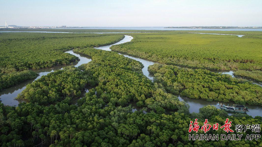 海南东寨港:生态修复 白鹭起舞