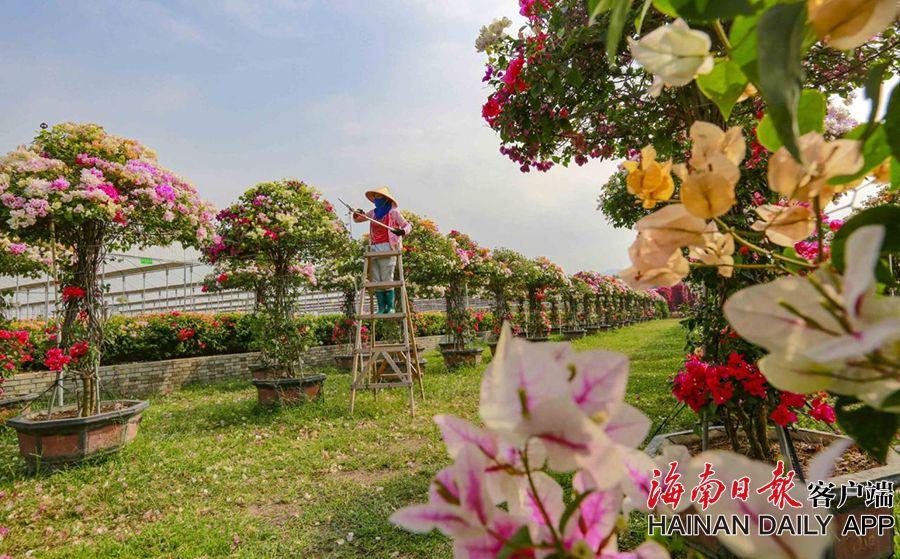 """昌江积极发展热带园林花卉产业 打造""""四季花海"""""""