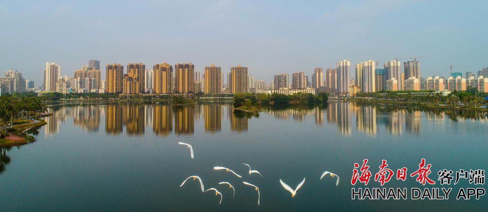 海口:红城湖公园鹭鸟舞翩跹