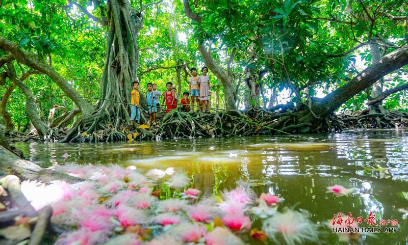 儋州:千年古村玉蕊花香